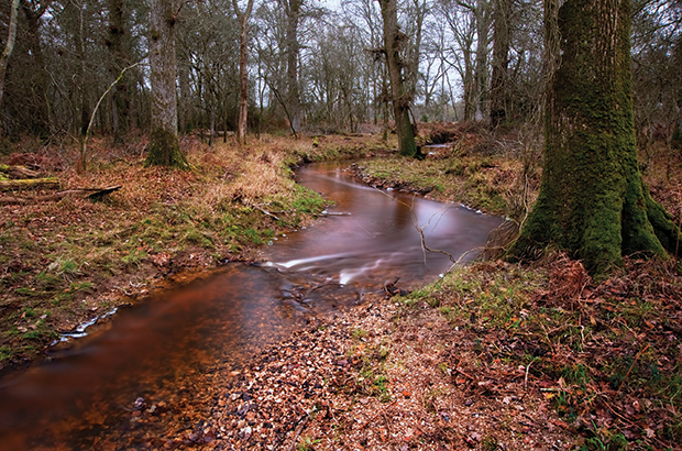 Stream flowing through vibrant Winter Autumn Fall forest landsca